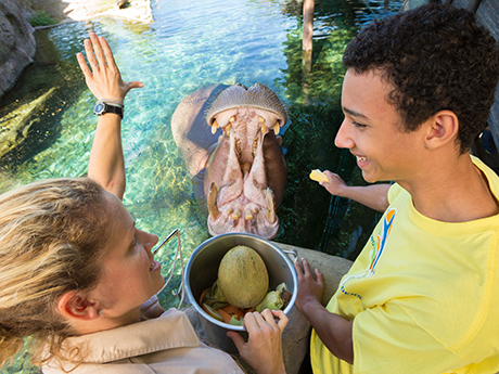 Summer Resident Camps at Busch Gardens Tampa Florida
