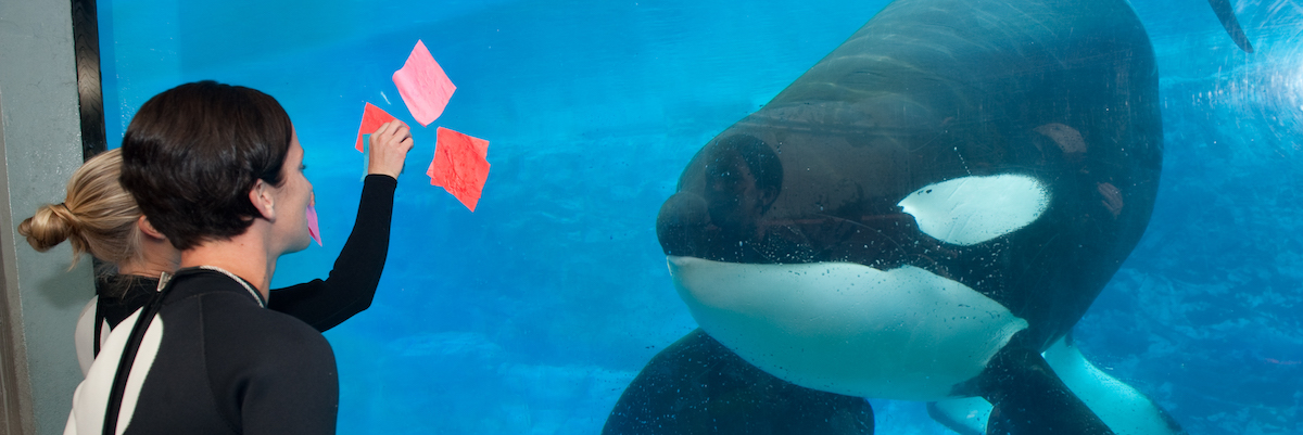 The Life and Care Of Tilikum At SeaWorld