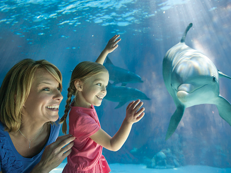 FREE SeaWorld Teachers` Fun Ca...