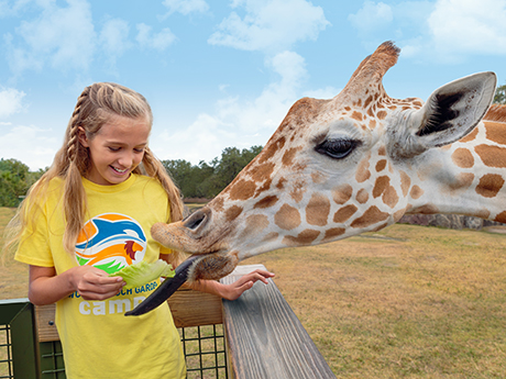 Summer Day Camps at Busch Gardens Tampa Florida