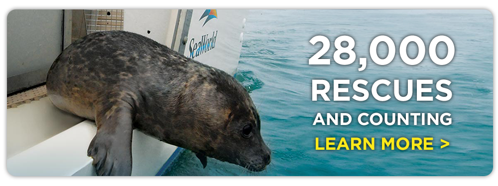 28,000 Rescues and counting.  Learn More.